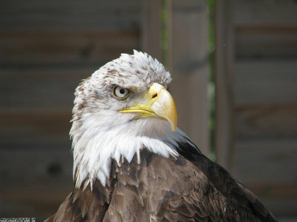 Eagle-Photos-22