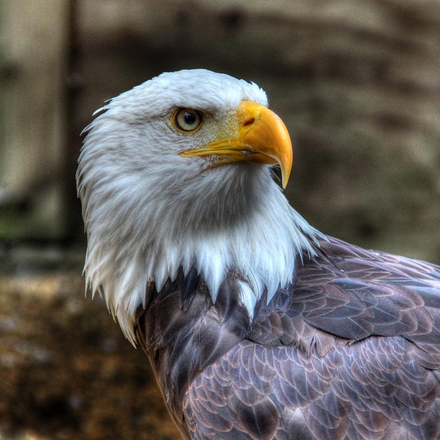 Eagle-Photos-23