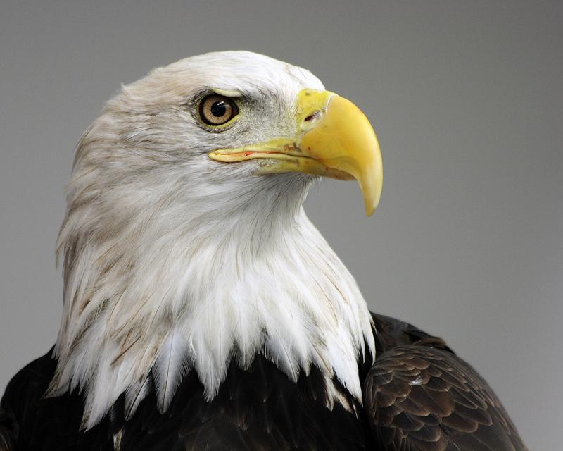 Eagle-Photos-24