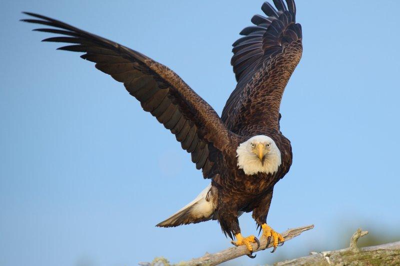 Eagle-Photos-27
