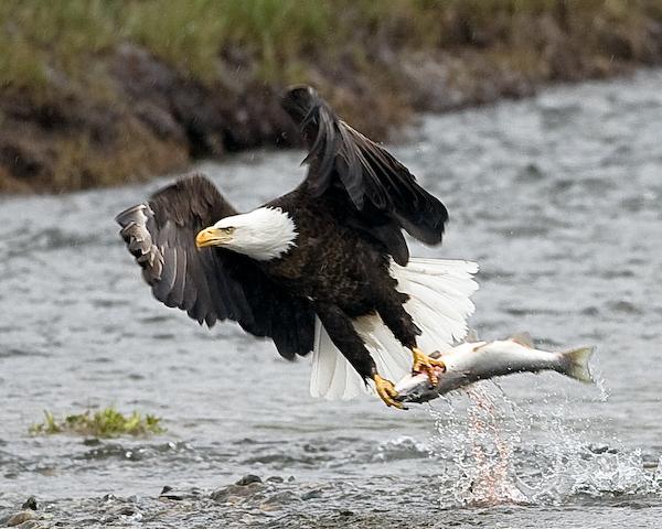 Eagle-Photos-28