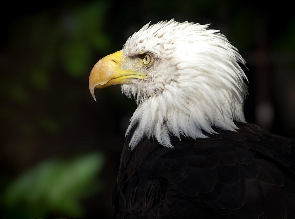 Eagle-Photos-29x
