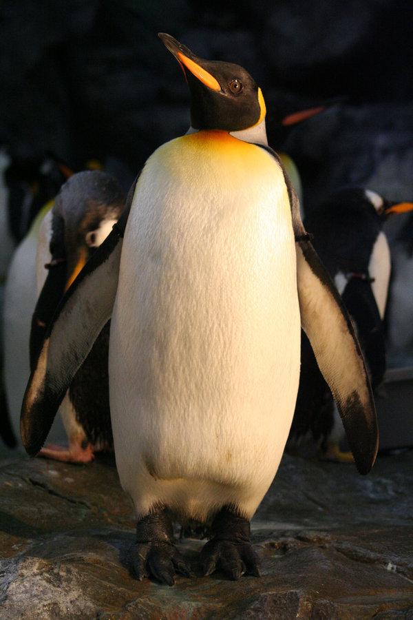 Penguin-Awareness-Day-03