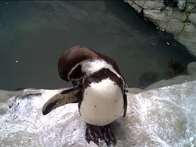 Penguin-Awareness-Day-04