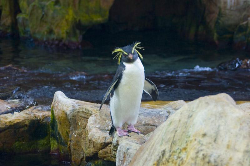 Penguin-Awareness-Day-05