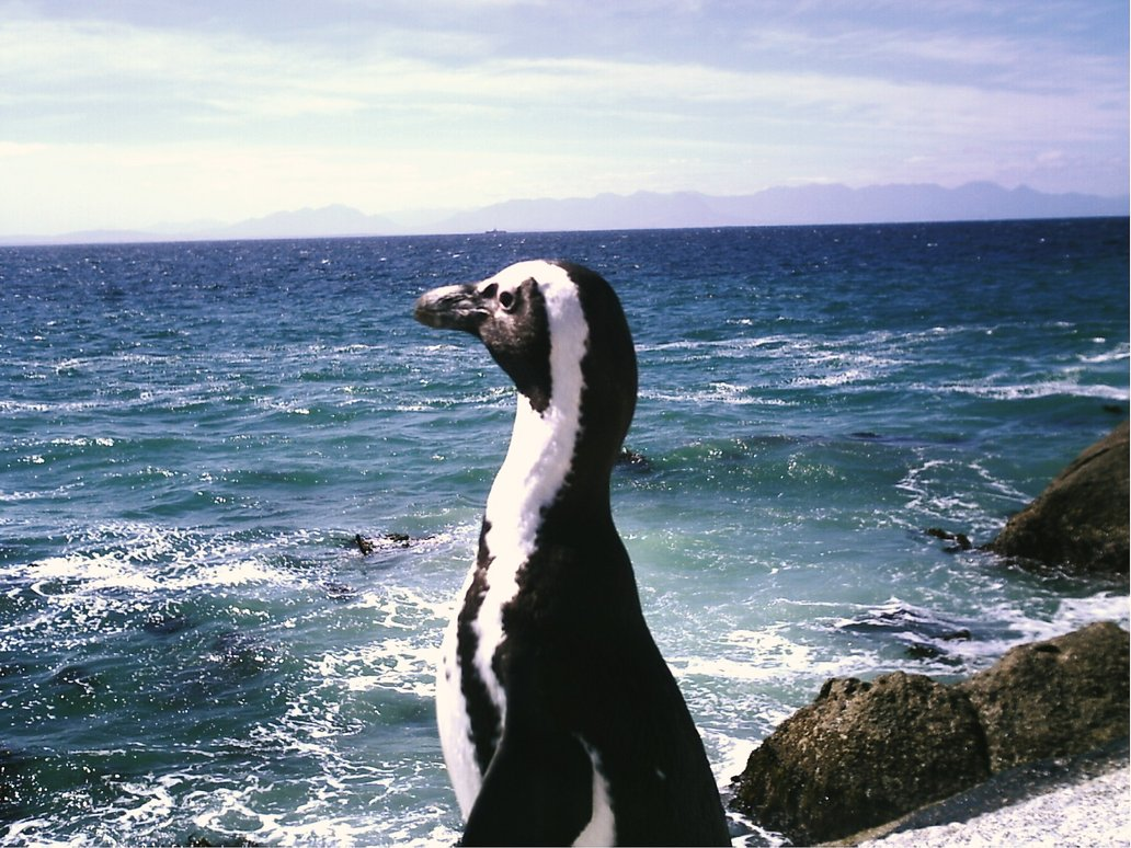 Penguin-Awareness-Day-06