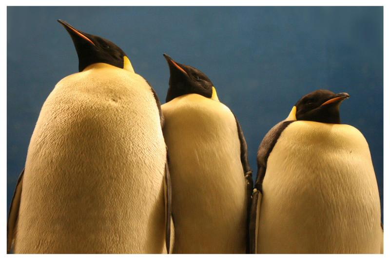 Penguin-Awareness-Day-08