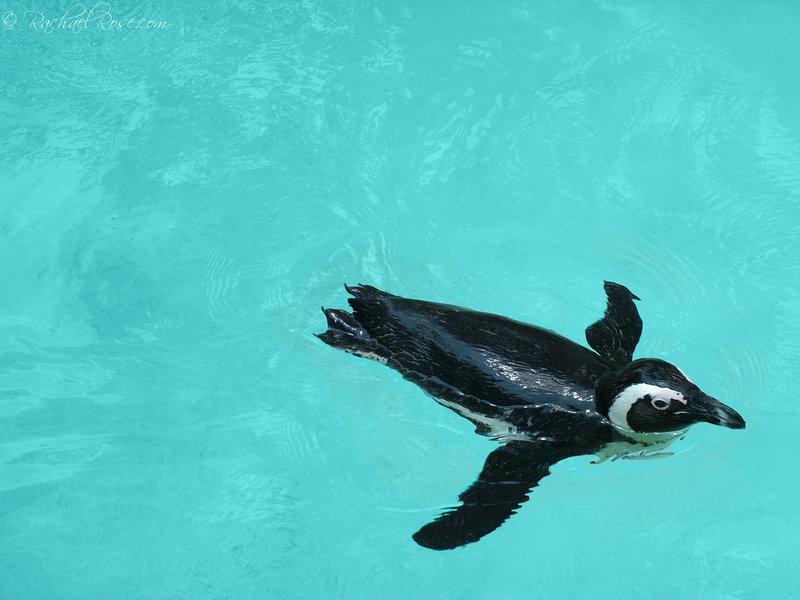 Penguin-Awareness-Day-11