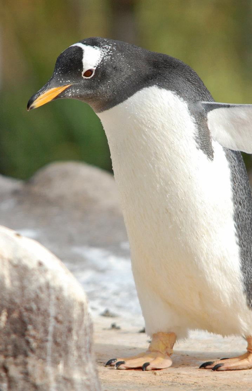 Penguin-Awareness-Day-12