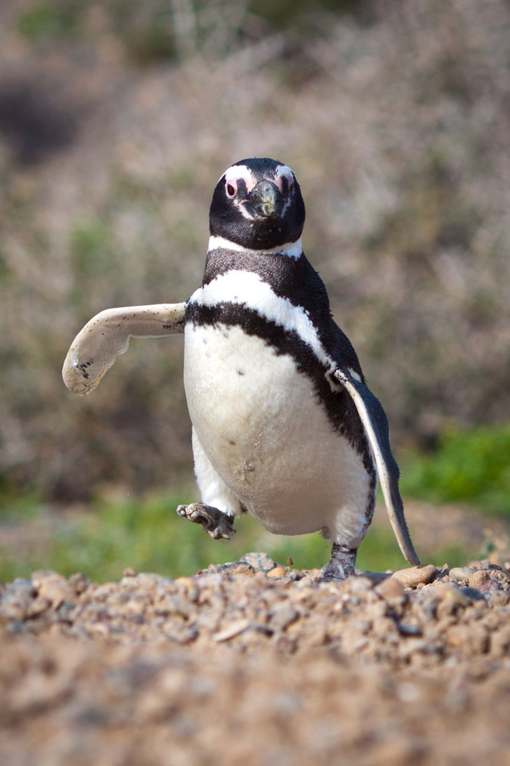 Penguin-Awareness-Day-13