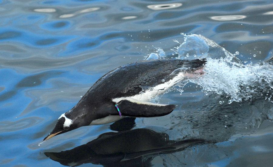 Penguin-Awareness-Day-14