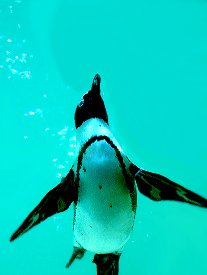 Penguin-Awareness-Day-15