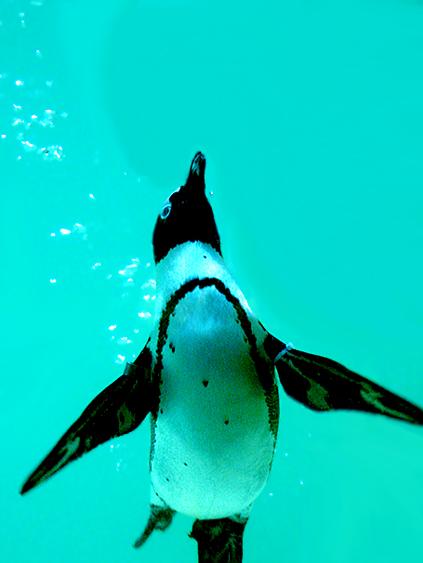 Penguin-Awareness-Day-15