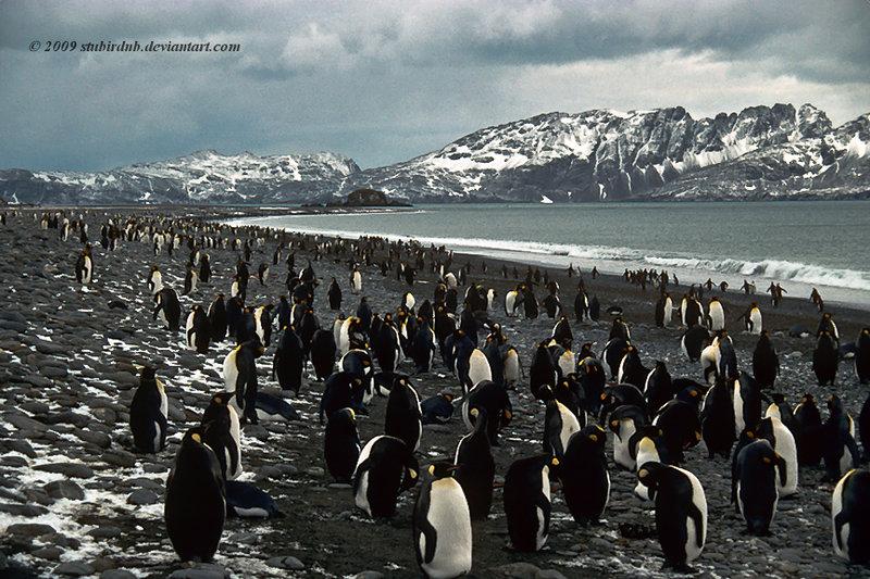 Penguin-Awareness-Day-16