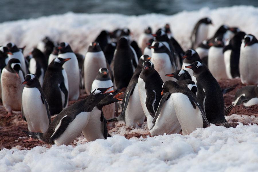 Penguin-Awareness-Day-17