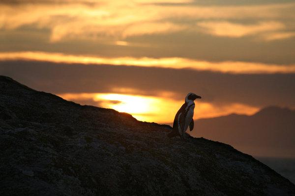 Penguin-Awareness-Day-20