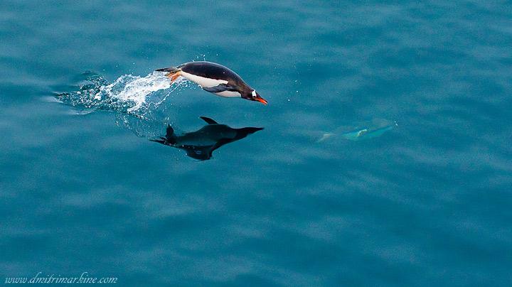 Penguin-Awareness-Day-21