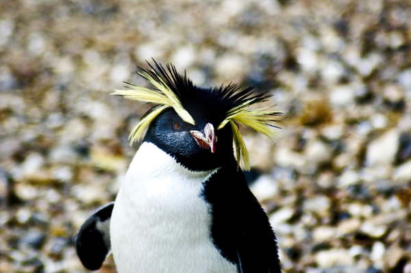 Penguin-Awareness-Day-23