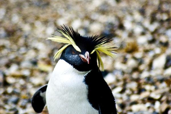 Penguin-Awareness-Day-23