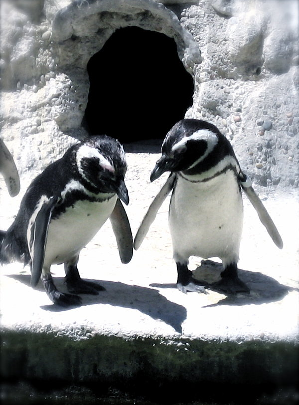Penguin-Awareness-Day-26