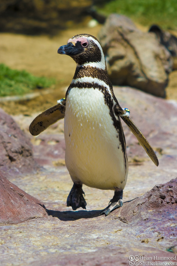 Penguin-Awareness-Day-27