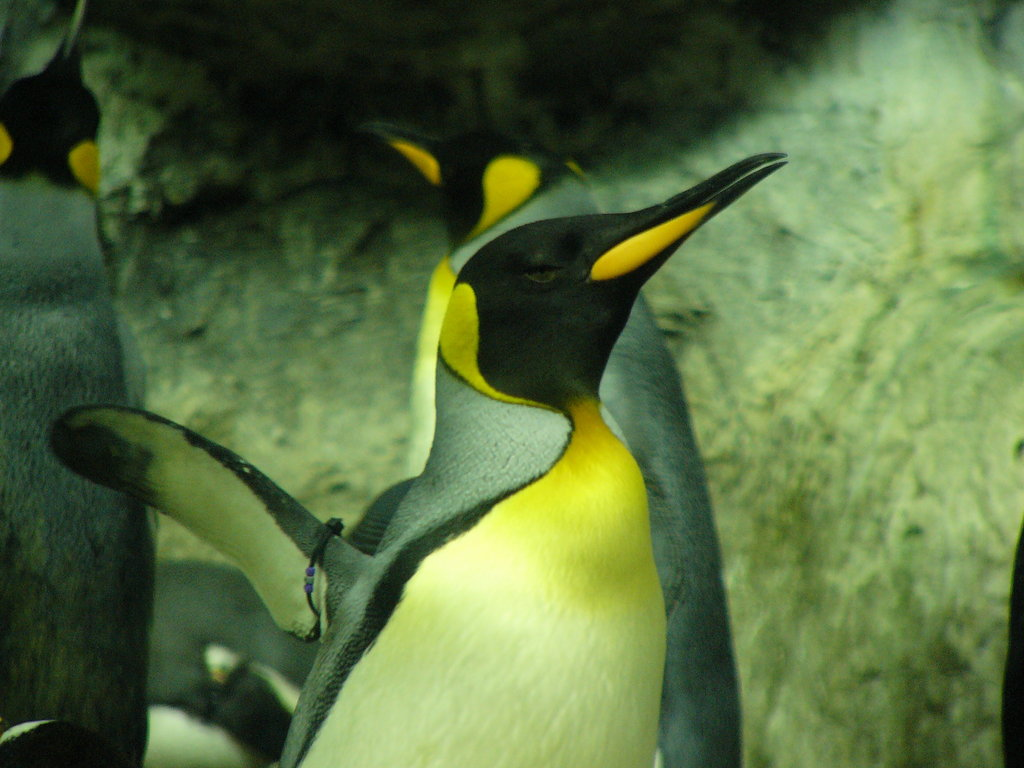 Penguin-Awareness-Day-30