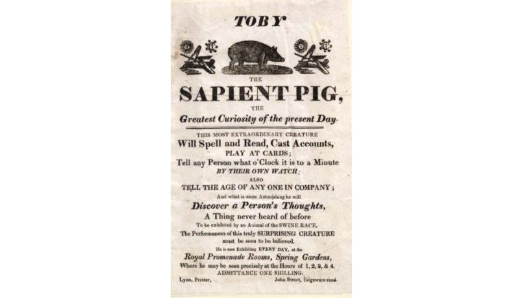 Interesting Things You Didn't Realize About Posters - Toby The Sapient Pig